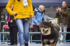 kind-hond show 1