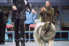 kind-hond-show-2