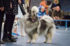 kind-hond show 5