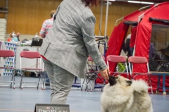 nr-3-beste-jongste-pup-in-show