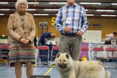 Beste pup in show