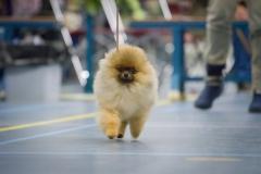 erering bij beste jongste pup in show