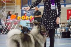 kind-hond show 6