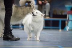 kind-hond-show-7